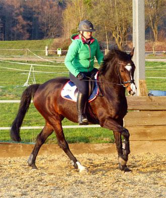 Mobiler Beritt beim Pferdehalter - Einstellen des Pferdes