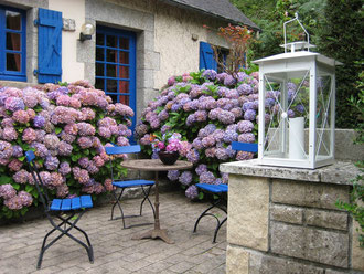 Hortensienpracht am Gartengrill.