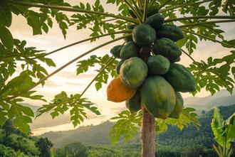 campagna di piantumazione e forestazione di Fogliaviola Design in Tanzania