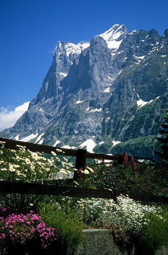 Bild: Wetterhorn 3701 m