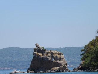leone all'Isola Bisentina