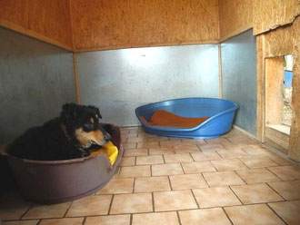 begehbare Hundehütte