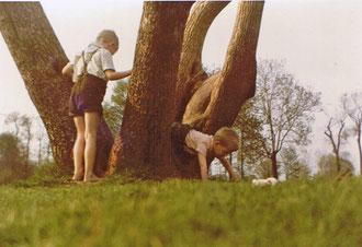 """unser Baum"" an der Alsterwiese"