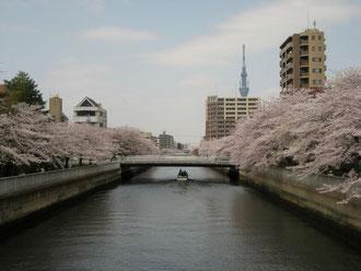 清澄 eastend TOKYOBOOKS近所の川からの眺め