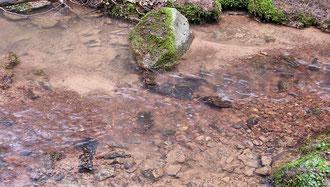 Laichgewässer mit sauberem und gut durchspültem Kiesuntergrund