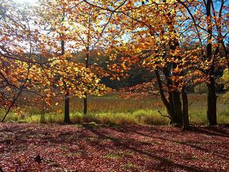 Blick zur Stubbenwiese im Nationalpark Jasmund