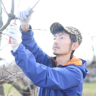 富有柿の剪定