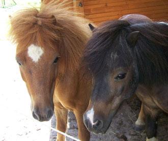 Fridolin und Hannibal, viele Jahre mußten sie im Zirkus ihre Runden drehen
