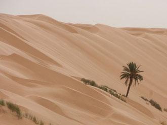 Ksar Ghilane, Sahara