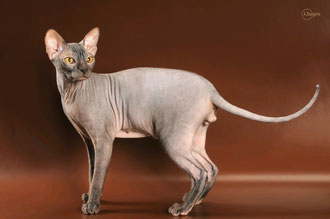 ALFRED CAT TESH OF STAR TESH
