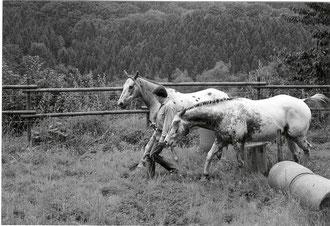 Dandy, AL und Whity in Saskatchewan (Nähe Breckerfeld)