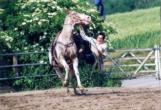 Zum Glück wurde niemand verletzt, auch das Pferd nicht.