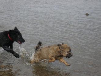 in action - frauchen sagt, mein papa kyang ist auch so ein wasserhund...