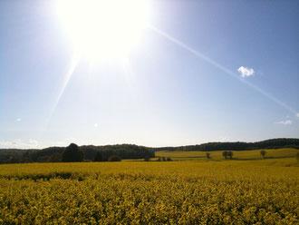 Rapsfeld im Sonneschein