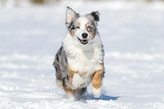 Kurs Hundeschule für Rückruf - Hund rennt zurück