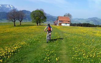 Aufstieg zum Hirschberg