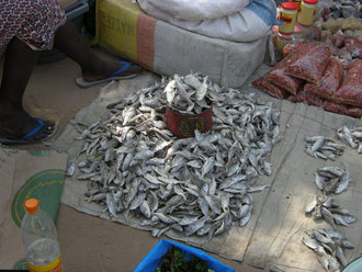 sur le stand du poissonnier