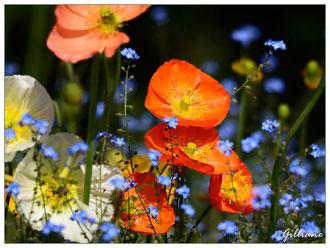 Jardin des plantes Coutance