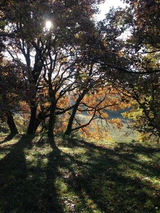 Forêt privée sur Beaumont les Valence