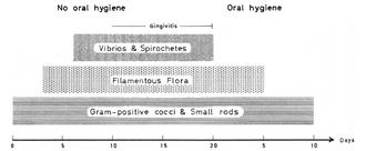 Tendances de la flore bactérienne en fonction du temps