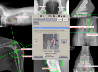 Metron features Guided Mark-up for Patented Hoof Analysis system, Vertebral Heart Score (VHS) for dogs and cats, Hip Distraction Index and Compression Index for dogs and cats and TPLO, TTA, Norberg Hip, and DAR analysis for dogs.