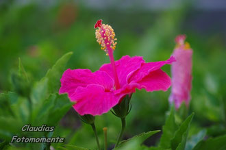 Und einige schöne Blumen auf der Insel.
