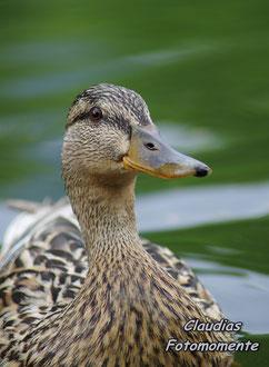 Eine Bodenmaiser Ente....