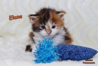 Mäuse...drei Wochen alt!!!!