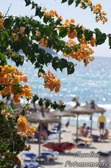 Blumen auf Mallorca...