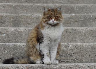 Eine Istanbuler-Strassenkatze...stolz und schön!