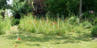 02.06.2019 : unsere kleine Blumenwiese mit gemähtem Rundweg
