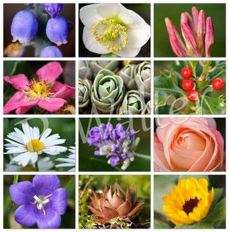 24.12.2015 : Gartenimpressionen an Heiligabend