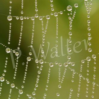 12.09.2015 : Spinnennetz