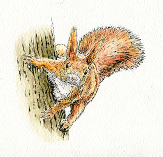 Squirrel on tree. (2017) Ink and ink wash. This is a small piece at about 5x5 inches. All rights reserved.