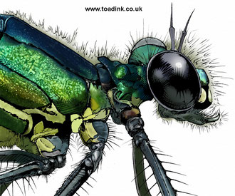 Banded Demoiselle (2015). Main reference was a photo by Gail Hampshire. All rights reserved.