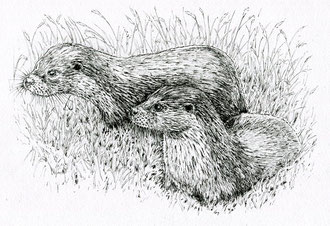 Otters by the riverbank (2017) Ink pen. Main reference was a photo by Peter Trimming. All rights reserved.