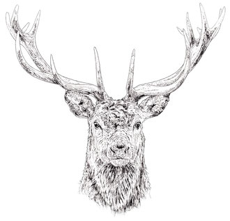 Stag. (2017) Ink pen. All rights reserved.