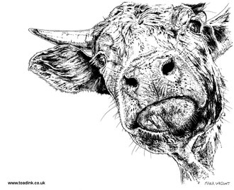 Cow (2016) Ink pen. All rights reserved.