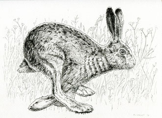 Runnin Hare (2017). Ink pen. All rights reserved.