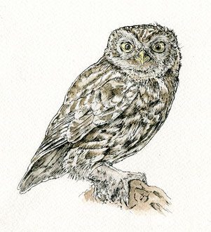 Little Owl (2017). Pen and Ink pencil. All rights reserved.