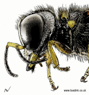 Wasp (2016). All rights reserved.
