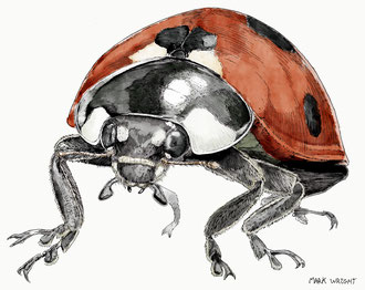 Ladybird (2016). Main reference used with kind permission from Raymond Dolmon. All rights reserved.