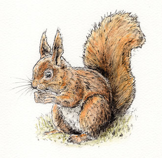 Squirrel on tree. (2017) Ink and ink wash. This is a small piece at about 6x6 inches. All rights reserved.