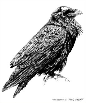Raven (2016) Ink pen. All rights reserved.