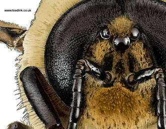 Honeybee drone (2015). All rights reserved.