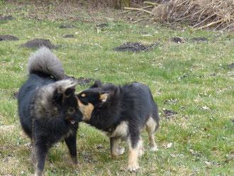 März 2016 Amaya mit ihrem Bruder und bestem Freund Wolle