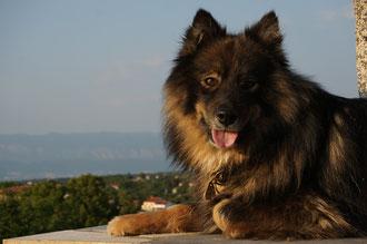 August 2014, Kroatien