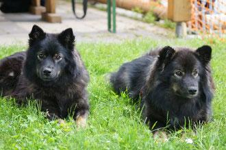 2016 Aika mit Schwester Amaya