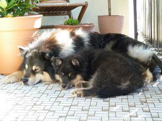 10 Wochen alt, im neuen Zuhause mit seinem besten Freund Askan