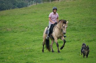 2014, zuverlässiger Begleiter am Pferd